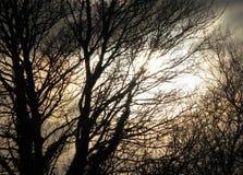 Vage griezelige achtergrond van gesilhouetteerde bomen en stormachtige hemel Royalty-vrije Stock Foto's