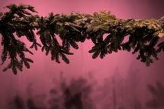 Vage Kerstmisachtergrond met glanzende het Leven Koraalsterren stock afbeeldingen