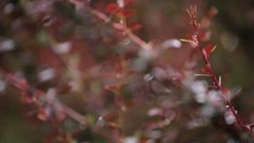 Vage rode bosachtergrond met waterdalingen stock videobeelden
