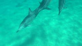 Vagem do golfinho que nada perto no vale de Makua filme
