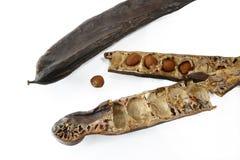 Vagens da alfarroba/pão com as sementes, fim de St John acima, isoladas sobre Fotos de Stock Royalty Free