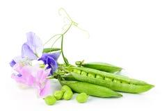 Vagens das ervilhas e das flores da ervilha doce imagem de stock
