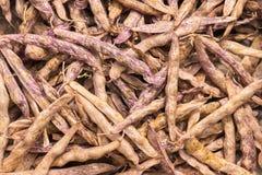 Vagens de feijão secadas do haricot Foto de Stock