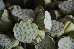 Vagens de Lotus foto de stock royalty free