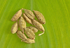 Vagens do cardamomo Foto de Stock
