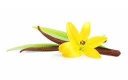 Vagens e flor da baunilha Foto de Stock Royalty Free