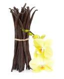 Vagens e flor da baunilha isoladas Foto de Stock Royalty Free
