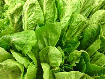 Fresh vegetables and green salad  Royalty Free Stock Photo