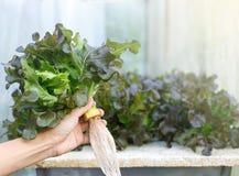 Vagetables владением руки свежие стоковые фотографии rf