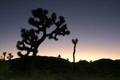 Vagga öknen för den klättringJoshua Tree Big Rocks Yucca Brevifolia mojaven Arkivfoto
