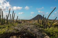 Vagga bildande, Aruba Arkivbild