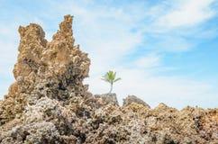Vagga bildande av den Tambaba stranden arkivfoto