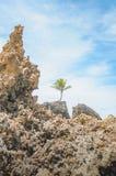 Vagga bildande av den Tambaba stranden fotografering för bildbyråer