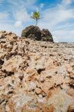 Vagga bildande av den Tambaba stranden royaltyfri bild