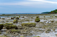 Vagga bildande i havet Arkivfoto