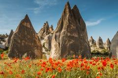 Vagga bildande och blommor av Cappadocia Arkivfoton