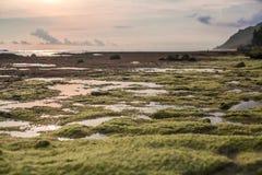 Vagga bildande på lågvatten på havet Arkivbilder