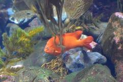 Vagga fisken Arkivfoto