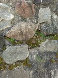 vagga gräs Royaltyfria Foton
