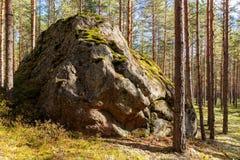 Vagga i en solig skog Arkivfoton