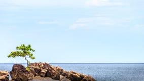 Vagga i havet med trädet och göra klar vatten Härliga seascapewi royaltyfria foton