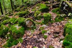 Vagga jäkelfingret i Kaukasus berg Royaltyfria Foton