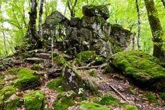 Vagga jäkelfingret i Kaukasus berg Arkivfoto