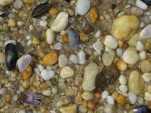Vagga kiselstenar och snäckskal på stranden royaltyfri fotografi