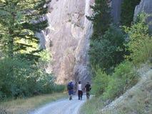 Vagga klättrare Arkivfoto