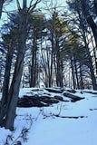 Vagga klippan i vildmarkvinterskog av evergreen royaltyfri foto