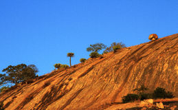 Vagga landsape med naturlig vegetation Royaltyfria Bilder