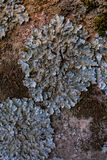 Vagga, laven och mossatextur och bakgrund Mossig stenbakgrund Abstrakt textur och bakgrund för formgivare Royaltyfri Foto