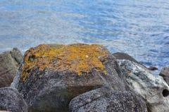 Vagga med laven på havskust Arkivbild