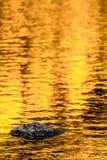 Vagga och guld- höstsjöreflexioner Arkivfoton