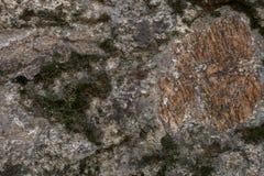 Vagga och mossatextur och bakgrund Mossig stenbakgrund Abstrakt textur och bakgrund för formgivare Royaltyfri Bild