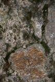 Vagga och mossatextur och bakgrund Mossig stenbakgrund Abstrakt textur och bakgrund för formgivare Royaltyfria Bilder