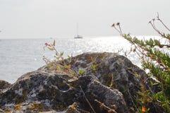 Vagga på kusten Arkivbild