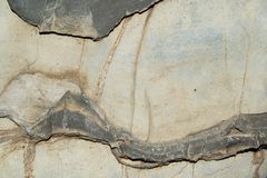Vagga skarvar arkivbild