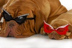 Vagga stjärnahundkapplöpning Arkivfoto
