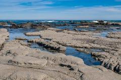 Vagga tips på den Kaikoura kusten Arkivfoton