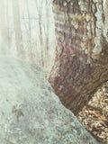 Vagga trädet Arkivfoton