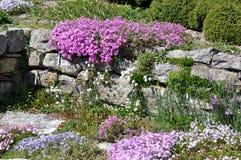 Vagga trädgården arkivbilder