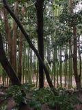 Vagga trädgården, med bambuvattenvägen Royaltyfri Foto