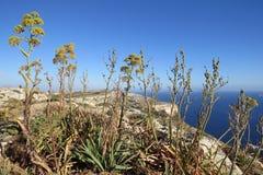 Vagga växter på klippor arkivfoton