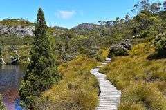 Vaggaberg som trekking i Tasmanien, Australien arkivfoto