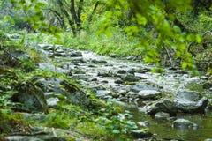 Vaggar av den smala skogfloden i berg Arkivbild