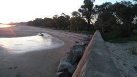 Vaggar den gulliga slumpmässiga stranden för perspektivet arkivbild