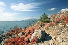 vaggar den svarta kusten för hösten havet Royaltyfria Bilder