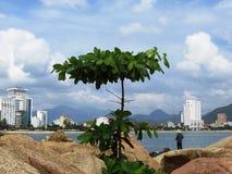 Vaggar det härliga landskapet för den Vietnam kusten havet Royaltyfri Bild
