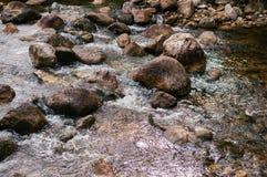 Vaggar flödande snabbt vatten för den tropiska floden och landskap Royaltyfria Bilder